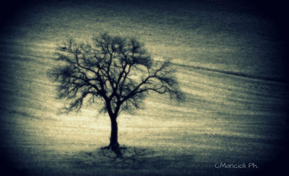 albero Cos