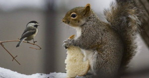 scoiattolo e uccellino